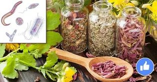 herbs against parasites